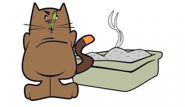 cat litter problems