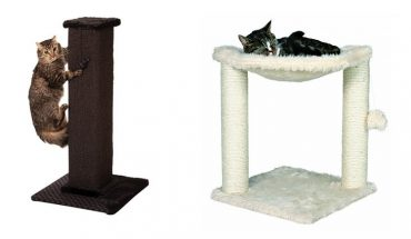 best scratching posts