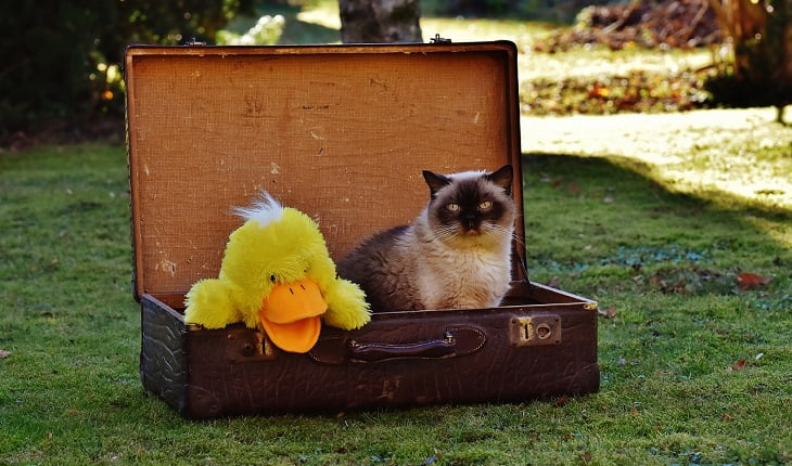 cat travel tips